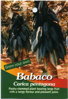 Grow your own Babaco Carica pentagona