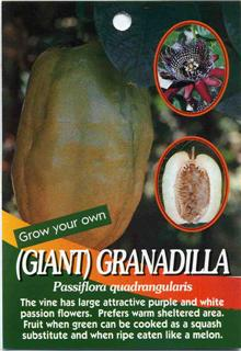 Giant Granadilla Passiflora quadrangularis The vine has large attractive purple and white flowers.