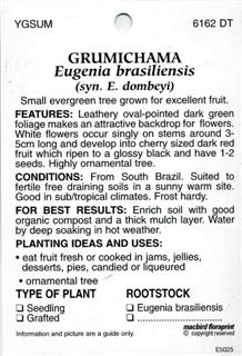 Grumichama Eugenia brasiliensis syn. E. dombeyi Small evergreen tree grown for excellent fruit.