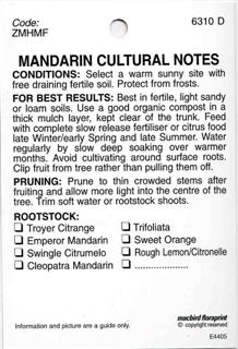 MANDARIN CULTURAL NOTES