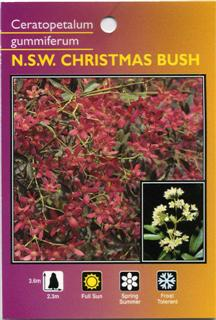 NSW Christmas Bush