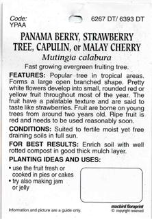 Panama Berry | Strawberry Tree | Capulin | Malay Cherry