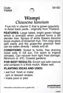 Wampi Clausena lansium Fruit rich in vitamin C