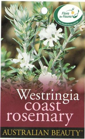 Coast Rosemary Westringia