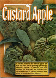 Custard Apple A versatile fruit tree that reaches approx: 6m high