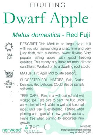 Dwarf Apple Red Fuji