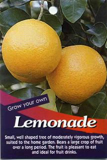 Lemonade Small well shaped tree of moderately vigorous growth, suited to the home garden.