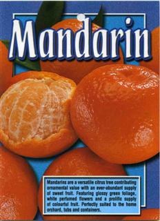 Mandarin Mandarines are a versatile citrus tree
