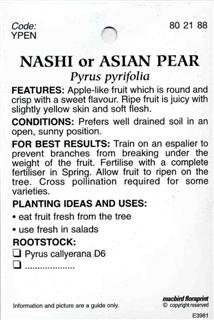NASHI or ASIAN PEAR