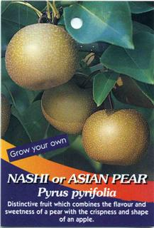 Nashi or Asian Pear Pyrus pyrifolia Distinctive fruit which combines the flavour and sweetness