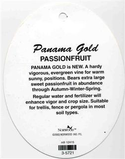 PANAMA GOLD is NEW. A hardy vigorous, evergreen vine for warm sunny