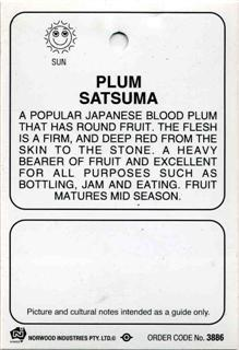 Plum Satsuma a popular japanese blood plum