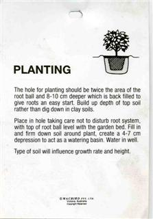 Planting The hold for planting should be twice the area of the root
