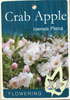 Apple Crab Apple - Ioensis Plena