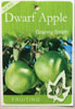 Apple Dwarf Granny Smith - Malus Domestica Granny Smith