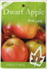 Dwarf Apple - Pink Lady - Malus domestica